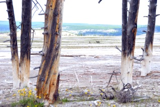 Yellowstone Trip - Summer 2014 (182)